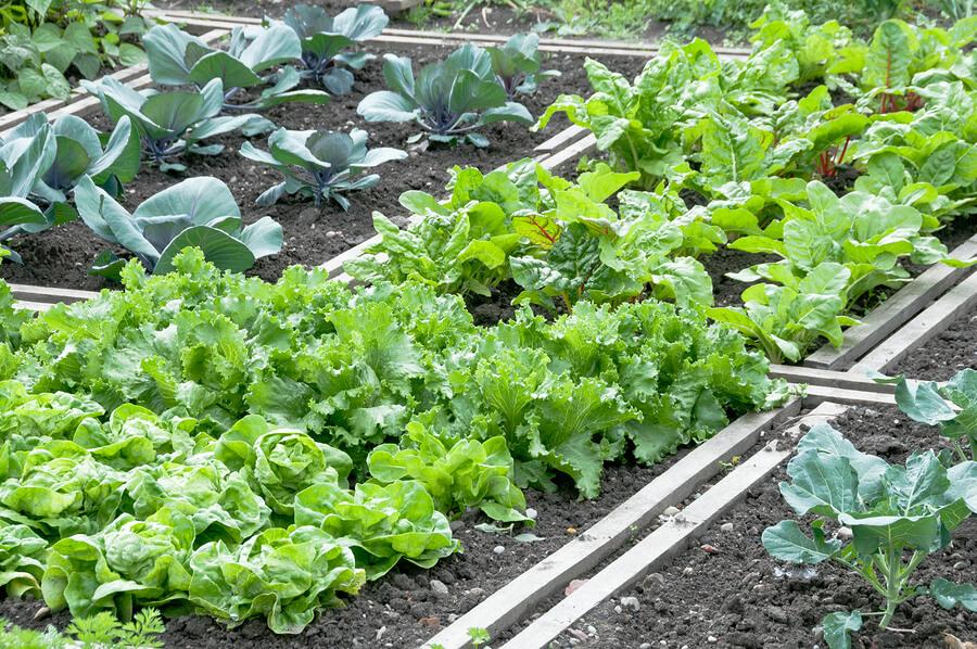 Super Gemüsebeet anlegen im Garten » Tipps, Ideen und Anleitung &VC_15